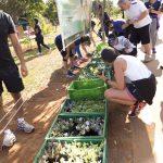 Seleção de mudas hortaliças